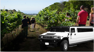 Wine Tours Oakland